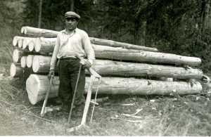 drvosjeca